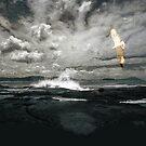 Freedom of Flight by Kim Roper