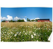 Oat Farm and Daisies  Poster