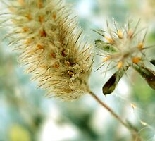 Fuzzy Seeds 2 by Maureen Kay