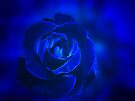 Rose in Blue by Sandy Keeton