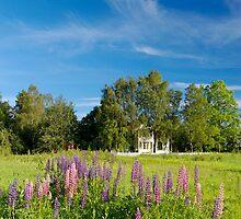 Summer Landscape  by Stanislav Sokolov