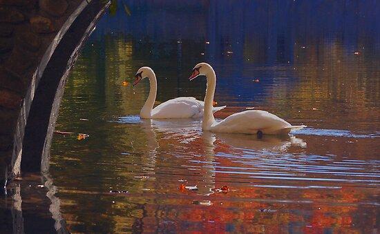 Swan Song by Jane Best