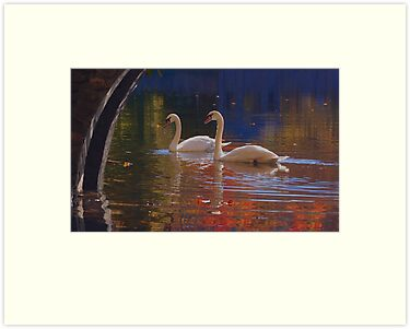 Swan Song by Jane Best