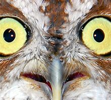 Sreach Owl Eyes by David Lee Thompson