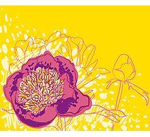 peony flowers Photographic Print