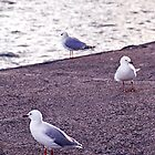 Cold Hearted Gulls by Morgan MacLaren