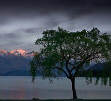 Wanaka Willow - Spring by Neil