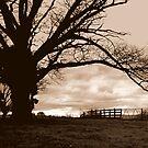 Winter Oak by David Henderson