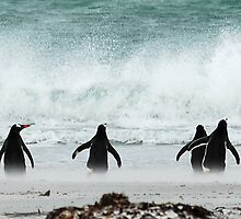 Penguins by Andrew Walker