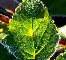 Frosty leaf by Frevik