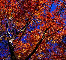 """Stained Glass Window"", Beech Tree, Westwood, MA by Richard VanWart"