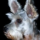 Sadie the Schnauzer by Bonnie T.  Barry
