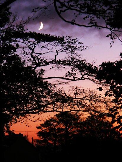 Purple Moon - Magilligan Co.Derry Ireland by mikequigley