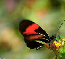 butterfly bokeh by Andrea Rapisarda