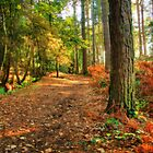 Delamere forest  by Jon Baxter