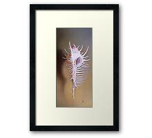 Venus Comb Shell Framed Print