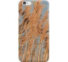 Reeds in the sun  iPhone Case/Skin