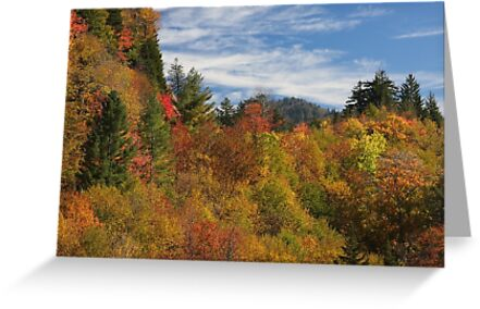 Fabulous Fall II by Gary L   Suddath