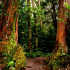 Manoa Falls in Rainbow Valley  by kevin smith  skystudiohawaii