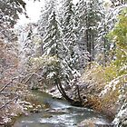 Spearfish Canyon Creek - Winter by WILDBRIMOWILDMAN