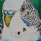 blue budgie by christine purtle