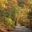 Beautiful Drive by Gary L   Suddath