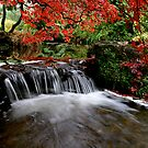 &quot;Autumn&#x27;s Water Fall in Red&quot; by Bradley Shawn  Rabon