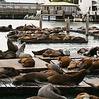 Seals at Pier 39 by klphotographics