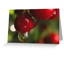 High Bush Cranberries and Raindrops Greeting Card