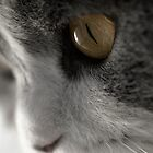 Looking at... by Novi