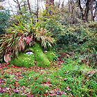 Giant's Head @ Heligan by Mark Wilson