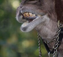 Could you Identify this animal?  Sandy Got it first A Camel!!! by ZeeZeeshots