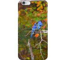 Cyanocitta Cristata - North American Blue Jay Couple Feeding Each Other | Middle Island, New York iPhone Case/Skin