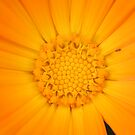 Marigold by Catherine Tranter