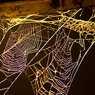 Web of silver and gold. by Jon Baxter