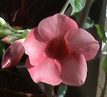 flower in my balcony garden by lovely1975