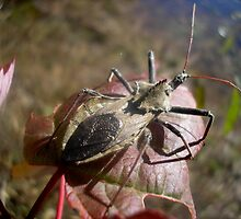 Stink Bug by loramae