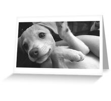 Brand new Puppy Greeting Card