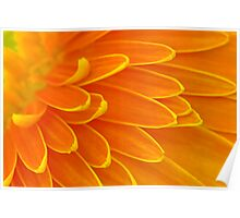 Gerbera Poems - The Divine Play of Creation Poster