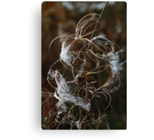 Wild flower in autumn Canvas Print
