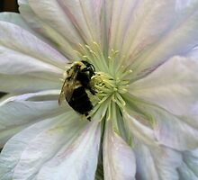 Bumble Bee On Clematis by SmilinEyes
