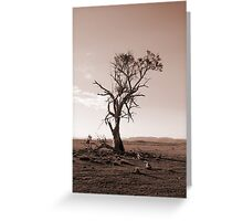 Lonely old Paddock Tree Greeting Card