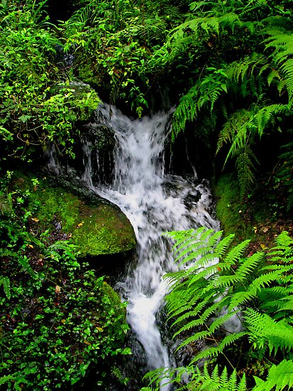 Small Mountain Stream by NatureGreeting Cards ©ccwri