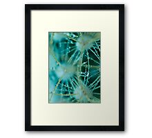 Cling.  Framed Print