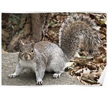 Syd the Squirrel Poster