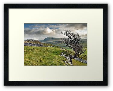Ingleborough from Twistleton Scar, Yorkshire Dales by Steve  Liptrot