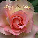 Pink Rose  by Bev Pascoe