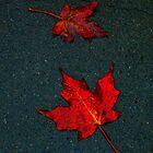Maple's III by Dana L