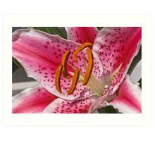 Oriental Lily Art Print