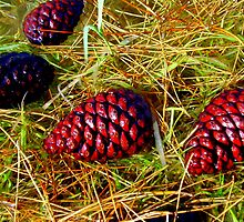 Pinecones And Needles by R&PChristianDesign &Photography